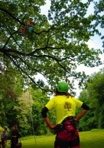 wspinaczka na drzewa