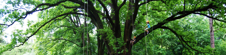 wspinaczka na drzewa 22