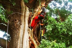 Ekspertyzy drzew 1
