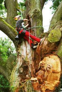 Praca na drzewach 3