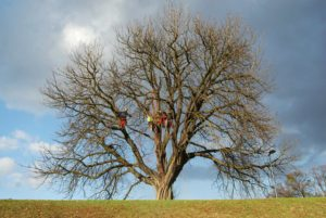 drzewo-arborysta-com